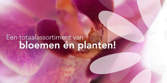 bloemenexport-nederland
